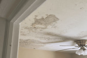 Ceiling Mold by Roof Leak