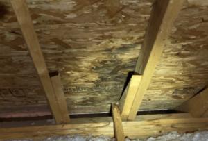 Roof Leak Wood Damage