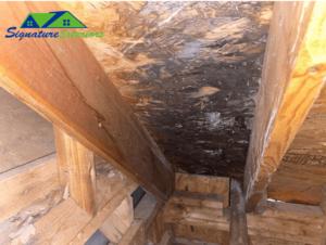 Wood in attic showing roof leak