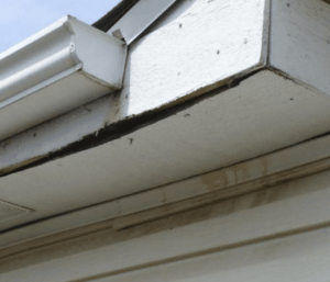 Damaged Soffit and Fascia